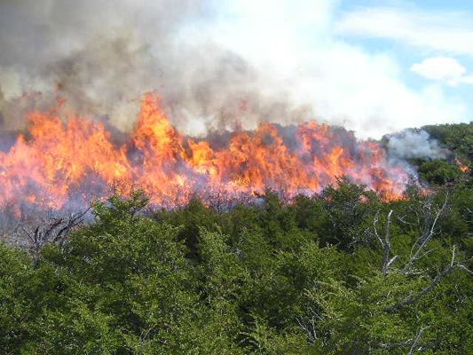 Protección de incendios forestales, marbella, estepona, san pedro de alcantara, campo de gibraltar, urbanizaciones