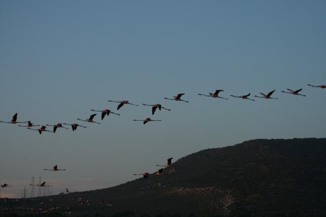 sfera_ornitologia_cursos