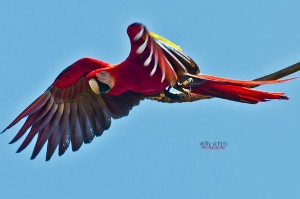 curso_fotografia_naturaleza_Costa_Rica