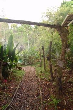 jardín bromelias orquideas