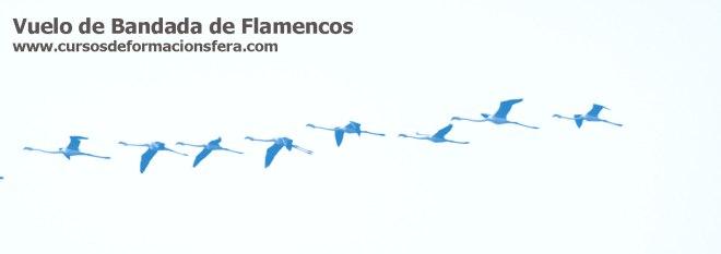 El vuelo de los flamencos, cerca a la Laguna de Fuentedepiedra, Málaga, España