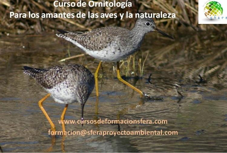 Curso ornitología