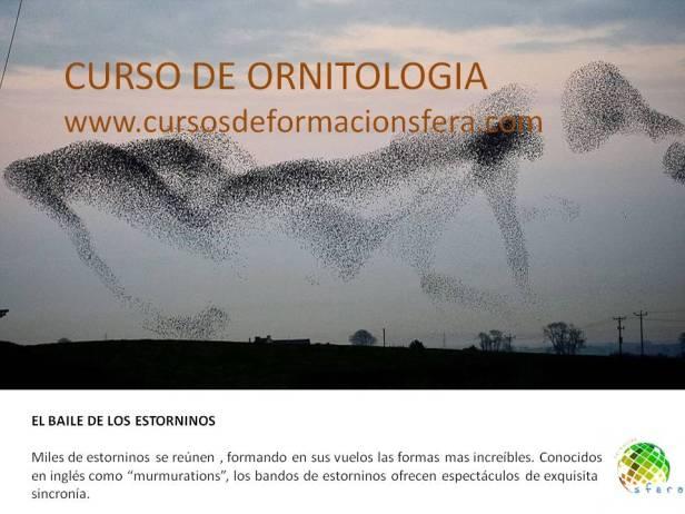 curso_AVIFAUNA_sfera_ambiental