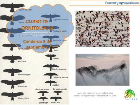 curso_ornitologia_sfera