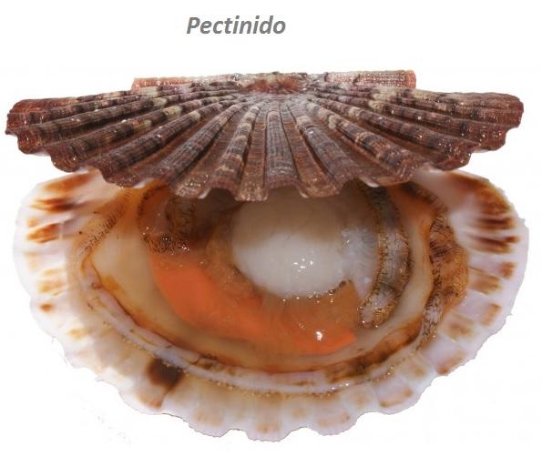 pectinido_sfera_ambien