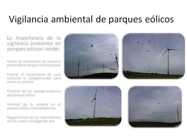 Vigilancia_ambiental_parques_eólicos_sfera_ambiental