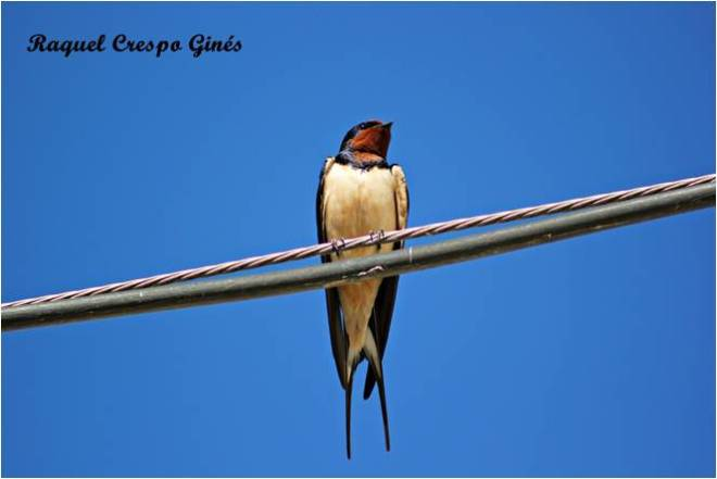 Curso ornitología sfera malaga