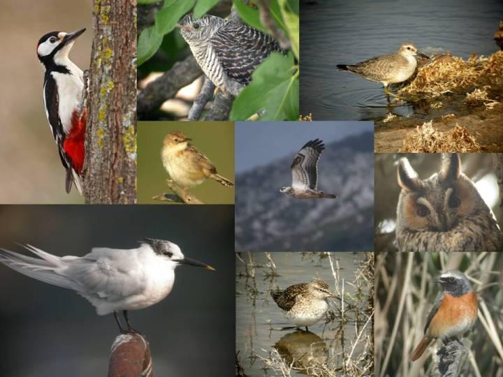 curso ornitología burgos, guadalajara, cádiz, soria, palencia, valladolid, cuenca, albacete, galicia, asturias, huelva, zamora, aragón