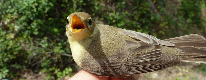 Curso Ornitología Málaga