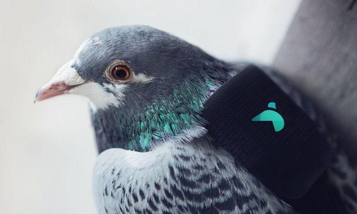 palomas-medir-polucion