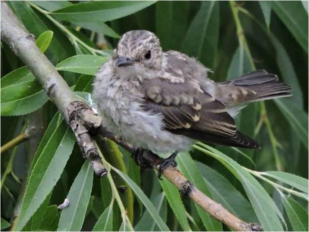 Curso ornitología malaga