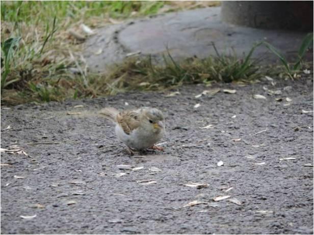 Curso ornitologia malaga