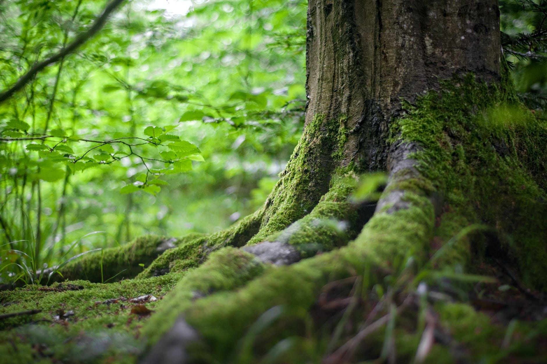 Base de tronco en la selva